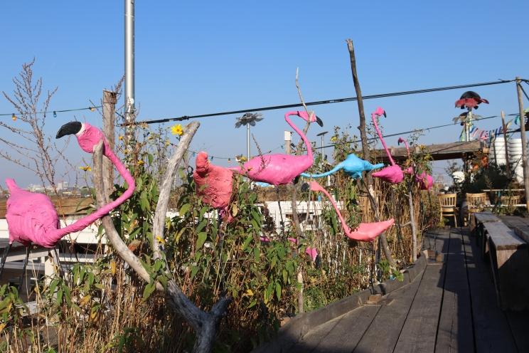 Flamingos 2019